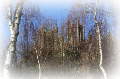 Ely Cathedral through the trees