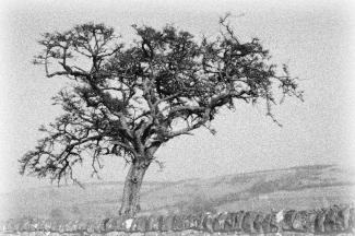 Hadrians Wall Tree scene