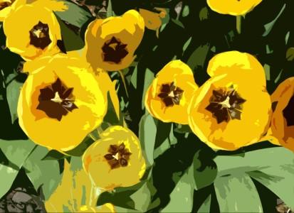 Tulips chintz